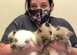 Krystle Reed with kittens